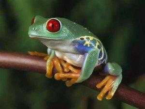 Interview des Pas-Pros n°1 : Mikaël Fisbein, la grenouille à grande bouche du .Fr dans Interview des Pas-Pros grenouille3-300x225